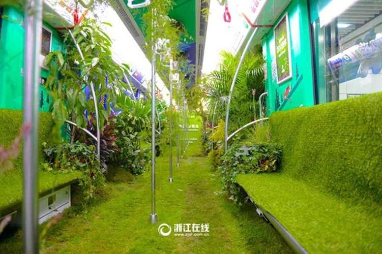 Mat mat ngam tau dien trong cay xanh o Trung Quoc-Hinh-6