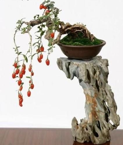 Ngam loat bonsai nhot sieu dep tao hinh doc la trung Tet-Hinh-2