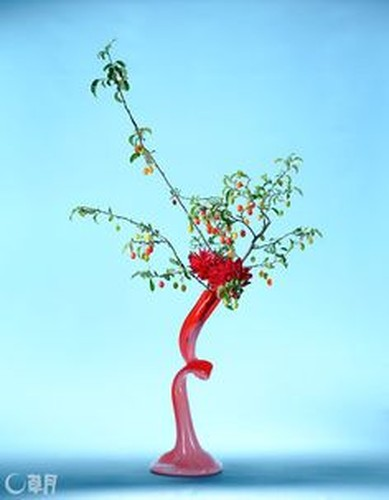 Ngam loat bonsai nhot sieu dep tao hinh doc la trung Tet-Hinh-3