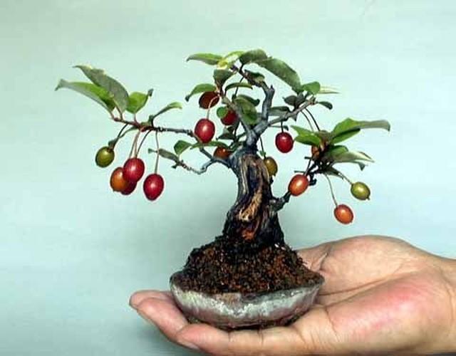 Ngam loat bonsai nhot sieu dep tao hinh doc la trung Tet-Hinh-5