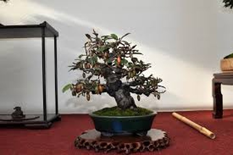 Ngam loat bonsai nhot sieu dep tao hinh doc la trung Tet-Hinh-6