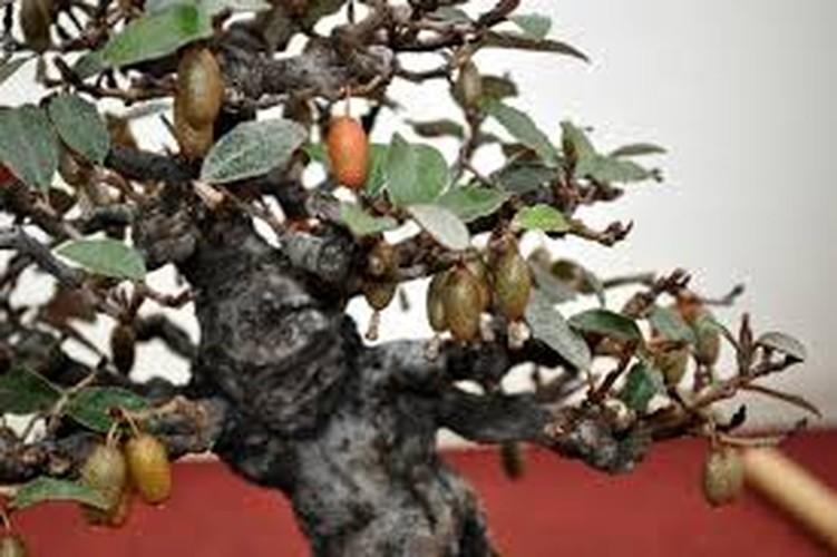 Ngam loat bonsai nhot sieu dep tao hinh doc la trung Tet-Hinh-7