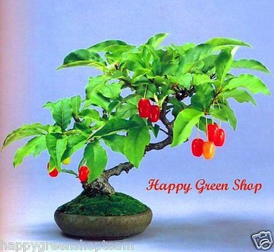 Ngam loat bonsai nhot sieu dep tao hinh doc la trung Tet-Hinh-9