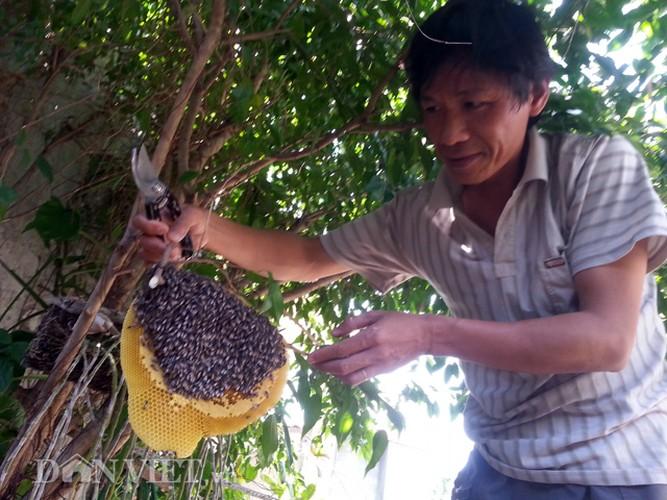 Hoi hop thu hoach mat ong ruoi tu nhien… tai san nha pho-Hinh-3