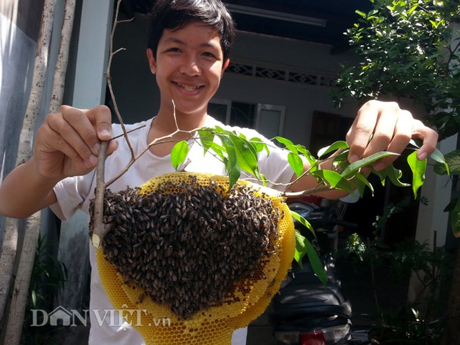 Hoi hop thu hoach mat ong ruoi tu nhien… tai san nha pho-Hinh-4