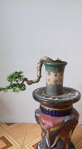 Ngam loat bonsai dang thac do sieu doc la-Hinh-7