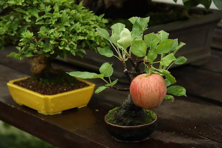 Chiem nguong 10 chau bonsai tu nhien dep nhat the gioi-Hinh-10