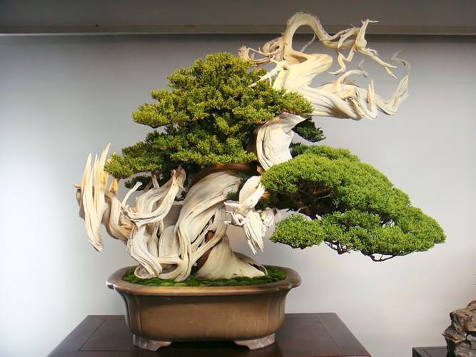 Chiem nguong 10 chau bonsai tu nhien dep nhat the gioi-Hinh-2