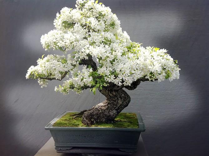 Chiem nguong 10 chau bonsai tu nhien dep nhat the gioi-Hinh-5