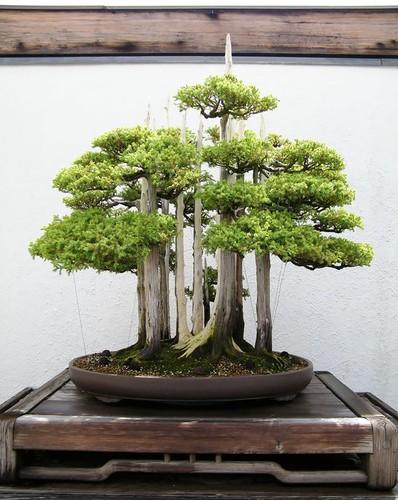 Chiem nguong 10 chau bonsai tu nhien dep nhat the gioi-Hinh-7