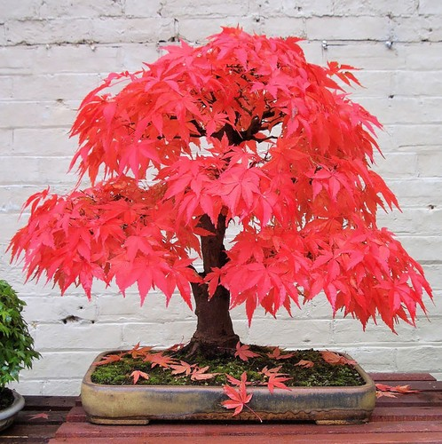 Chiem nguong 10 chau bonsai tu nhien dep nhat the gioi-Hinh-8