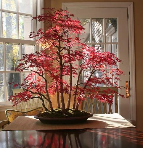 Chiem nguong 10 chau bonsai tu nhien dep nhat the gioi-Hinh-9
