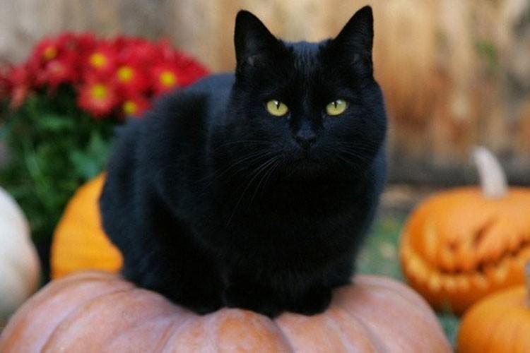 Rung ron nhung truyen thuyet bi an ngan nam ve Halloween