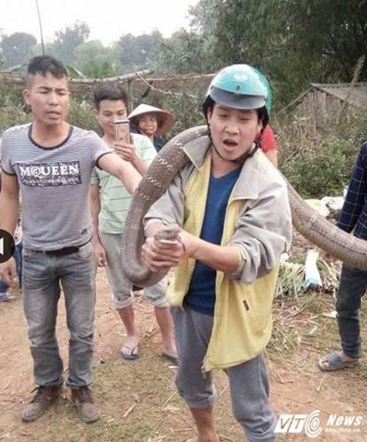 Nhung lan bat duoc tran, ran khong lo gay soc o Viet Nam-Hinh-2