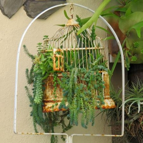 Bat mi cach bien long chim cu thanh gio hoa trang tri-Hinh-7