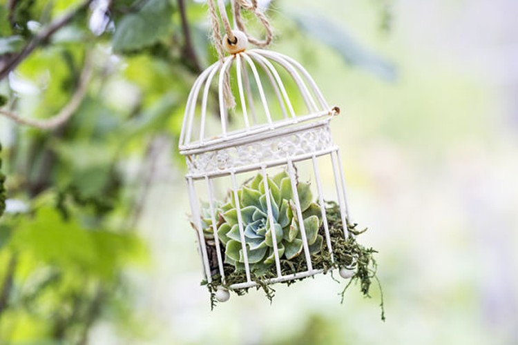 Bat mi cach bien long chim cu thanh gio hoa trang tri-Hinh-8