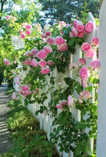 Goi y trang tri nha dep voi gian hoa leo-Hinh-6