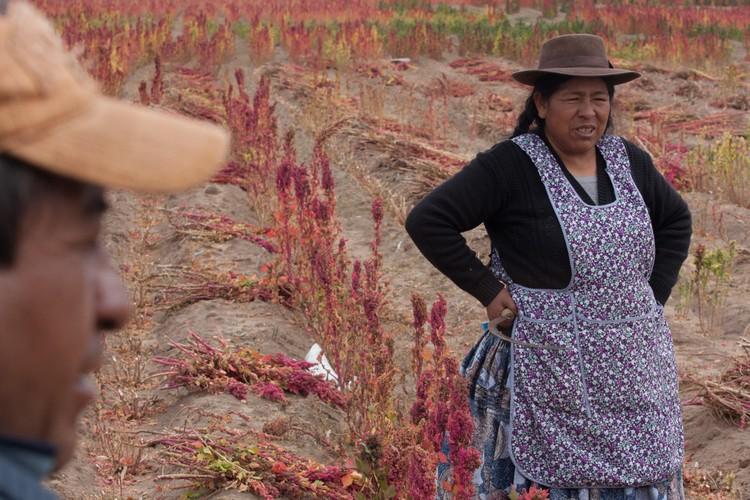 "Xem nong dan Bolivia thu hoach ""thuc pham vang""-Hinh-6"