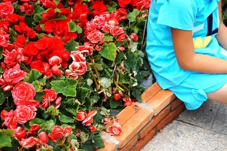 Hinh anh khong dep tren duong hoa Tet pho Nguyen Hue-Hinh-6