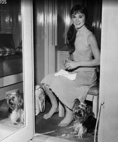 Nhung khoanh khac de doi cua Audrey Hepburn-Hinh-5