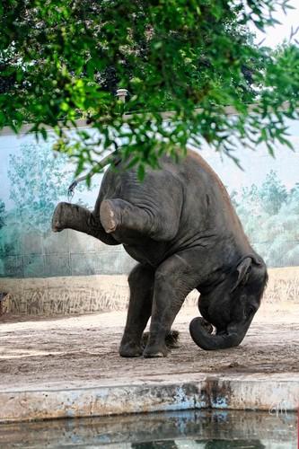 Voi khong lo the hien ban linh Yoga sieu viet-Hinh-6