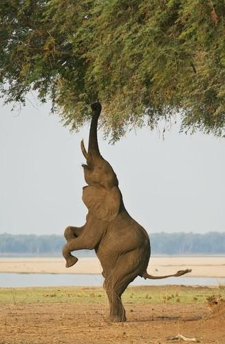 Voi khong lo the hien ban linh Yoga sieu viet-Hinh-8