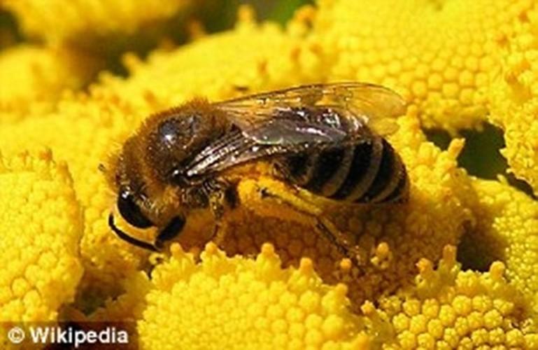 Kinh ngac nhung con ong robot co the thu phan cho hoa-Hinh-7