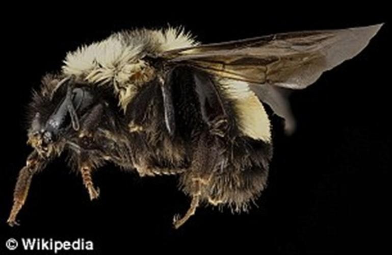Kinh ngac nhung con ong robot co the thu phan cho hoa-Hinh-8