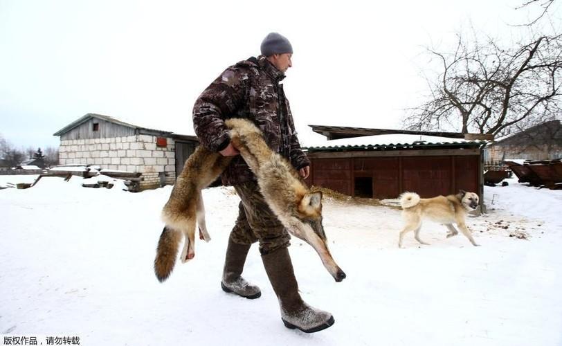 Ghe ron canh bat giet soi o khu vuc hoang da o Ukraina-Hinh-10