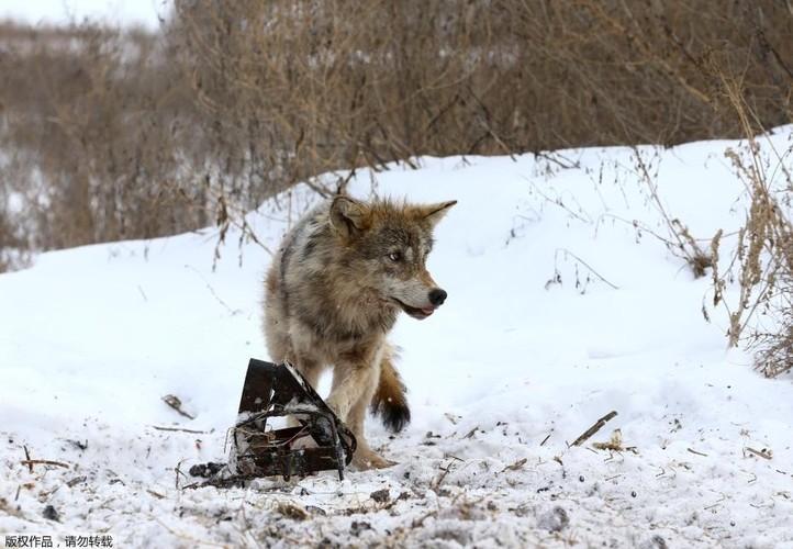Ghe ron canh bat giet soi o khu vuc hoang da o Ukraina-Hinh-5