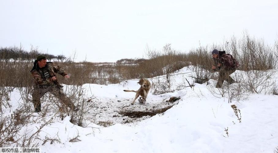 Ghe ron canh bat giet soi o khu vuc hoang da o Ukraina