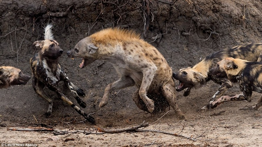 Kich tinh tran chien truyen ky giua cho hoang va linh cau-Hinh-6