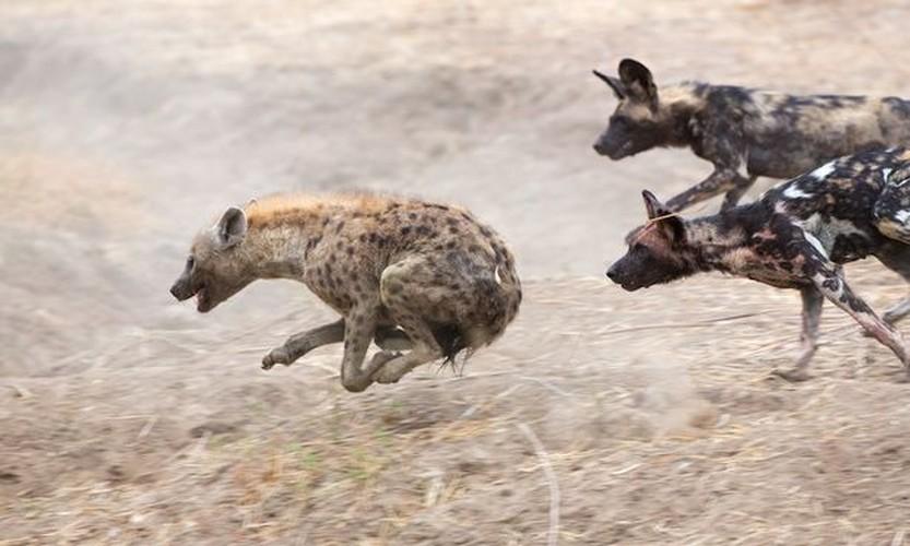 Kich tinh tran chien truyen ky giua cho hoang va linh cau-Hinh-9
