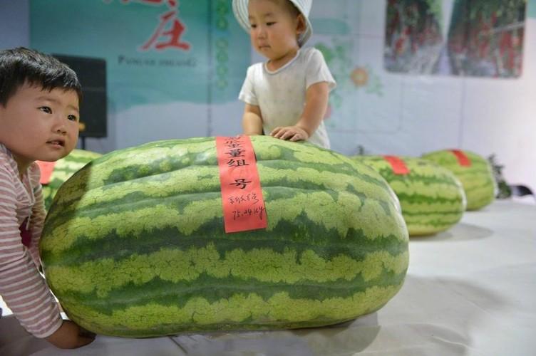 "Chuyen la hom nay: Dua hau ""vua"" nang toi 75kg lam ai cung soc-Hinh-2"