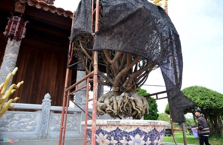 Nha tho To cua Hoai Linh trang hoang long lay don Tet-Hinh-10