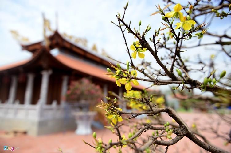 Nha tho To cua Hoai Linh trang hoang long lay don Tet-Hinh-8