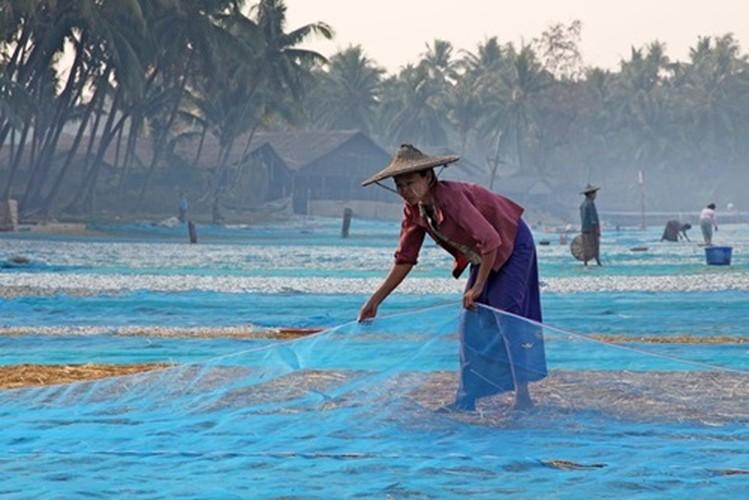 Loat anh me dam long nguoi ve dat Phat Myanmar-Hinh-5
