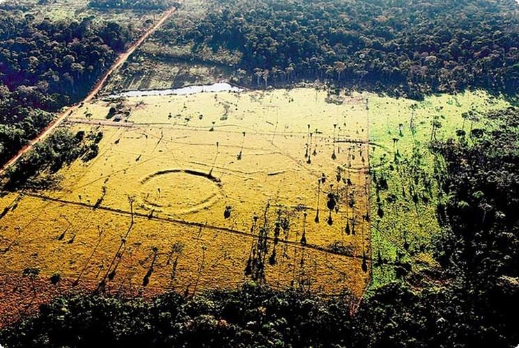 Giai ma cau truc 3.000 nam tuoi trong rung ram Amazon-Hinh-9