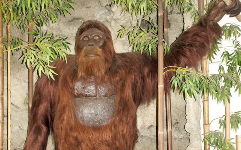 Vi sao Bigfoot la bi an kho giai nhat moi thoi dai?-Hinh-10