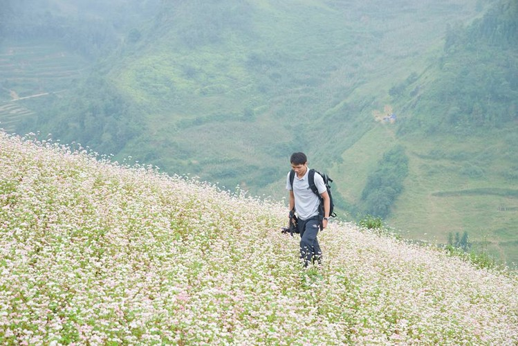 Ngam hoa tam giac mach no som o Bac Ha, Lao Cai-Hinh-3
