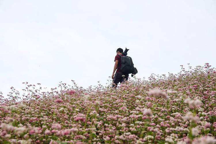Ngam hoa tam giac mach no som o Bac Ha, Lao Cai-Hinh-7