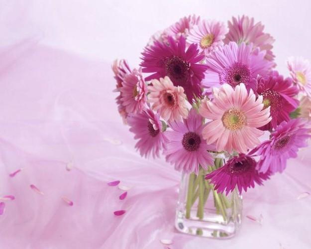 Loai hoa Tet nen trong de thai doc khong khi, ngua benh tat-Hinh-6