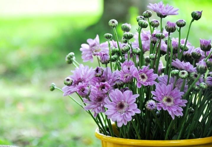 Loai hoa Tet nen trong de thai doc khong khi, ngua benh tat-Hinh-8