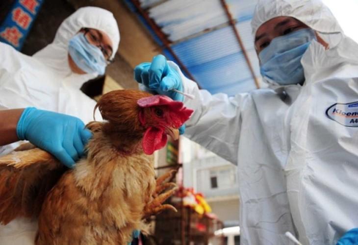 Song o thanh pho van co nguy co nhiem cum gia cam H7N9-Hinh-2