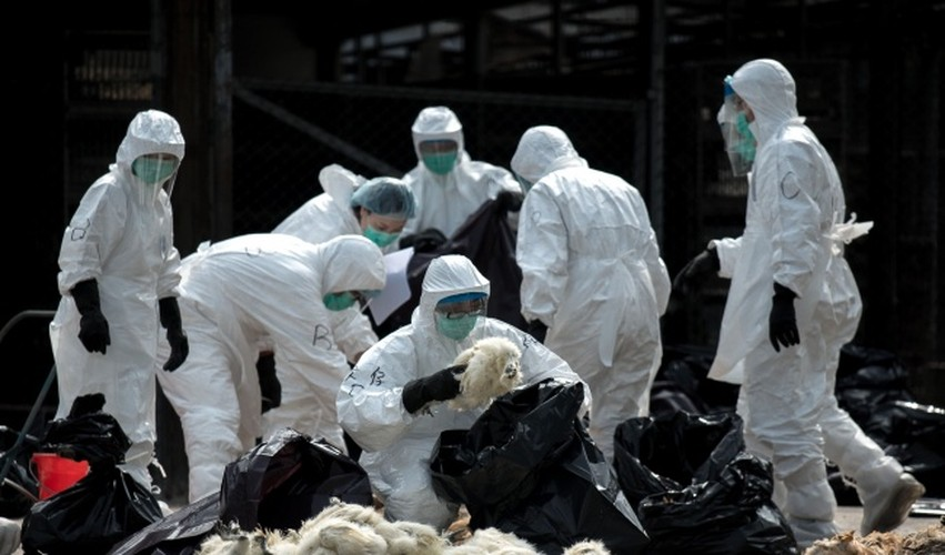 Song o thanh pho van co nguy co nhiem cum gia cam H7N9