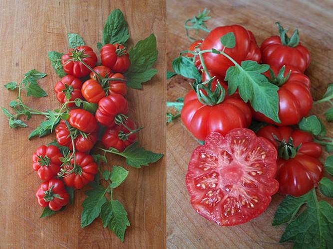 An ca chua sai cach kho tranh hoa deo than-Hinh-4