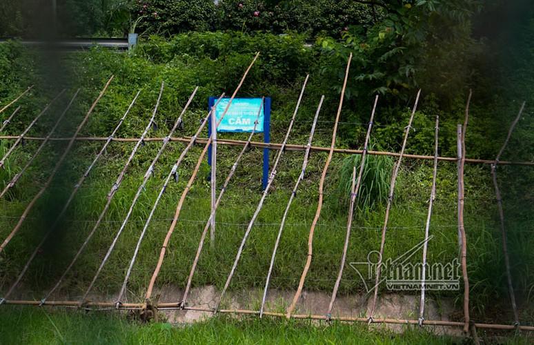 """Ngo ngang """"trang trai"""" trong rau, nuoi bo giua dai lo Thang Long-Hinh-3"""