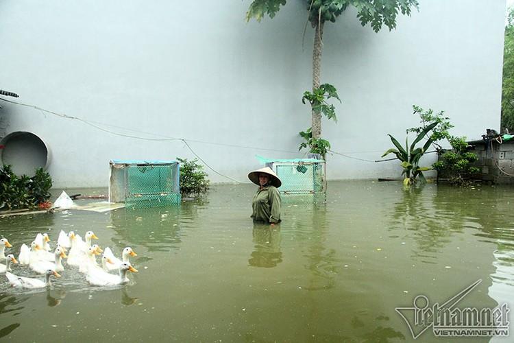Khon kho cuoc song nguoi dan noi vo de o Chuong My-Hinh-14