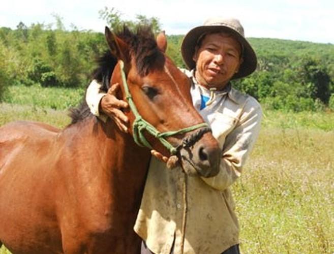 """Dieu it biet ve loai ngua """"noi danh"""" trong chien tran Viet Nam-Hinh-11"""