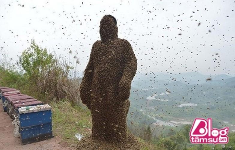 Cho 450.000 con ong dot, got sach ai nay deu choang khi nhin thay...